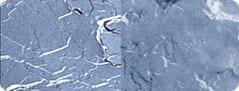 Krem z basą DMS vs naturalny płaszcz hydrolipidowa
